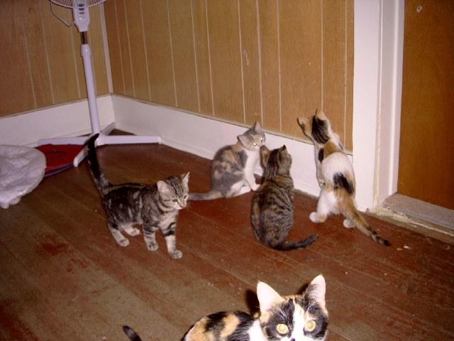 Toni, Tammy, Lulu & Haley